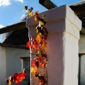 Autumn Grape Vine_edited