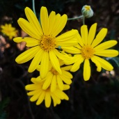 Yellow Flowers_edited
